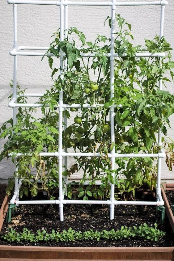 My New Heavy Duty Tomato Cage Hometalk