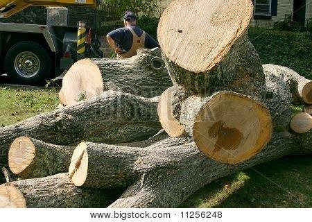 q freshly cut wood