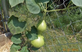 How to Grow Your Own Bird House Gourds