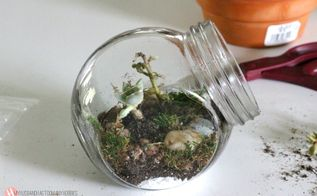 diy glass jar terrariums