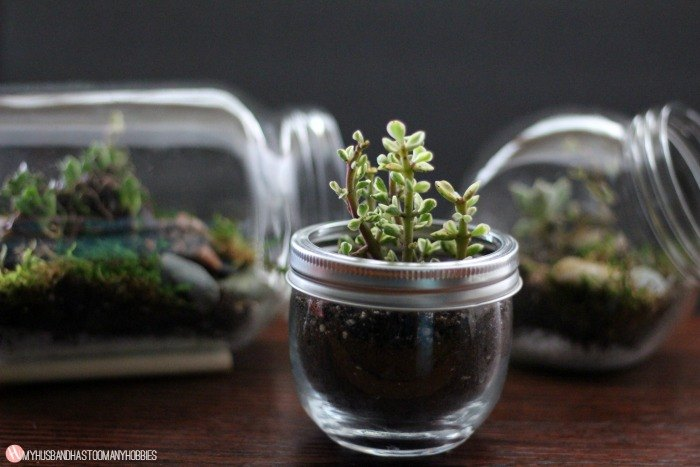 diy glass jar terrariums