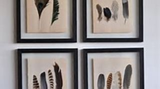 d9dded9500597 What to do with feather collection?   Hometalk