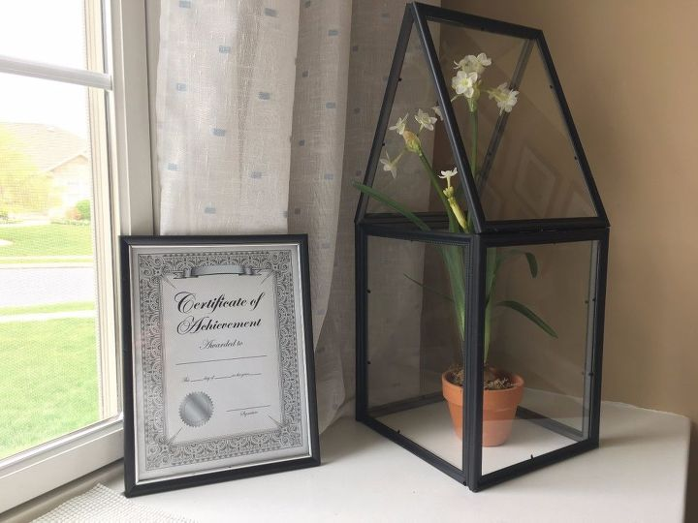 dollar store picture frame terrarium - Dollar Store Frames