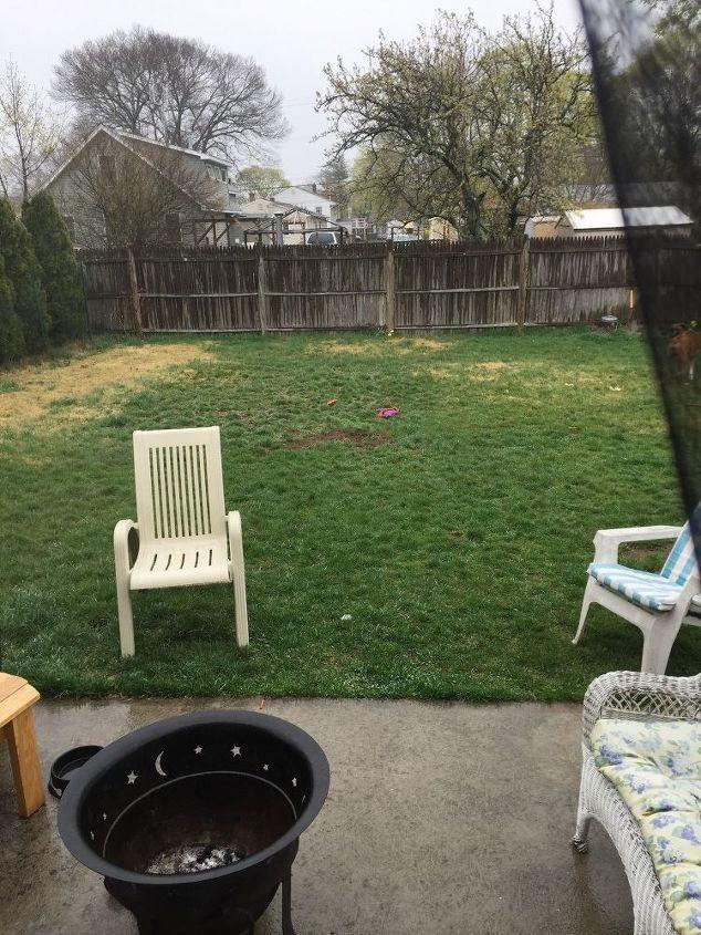 q backyard dilemma
