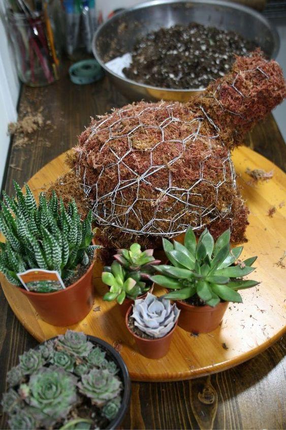 mini turtle topiary
