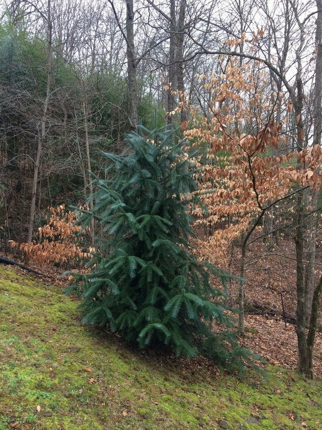 e followup to beautiful mystery evergreen residing in north carolina
