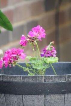chemistry hacks to grow a pretty easy patio garden even for non gar