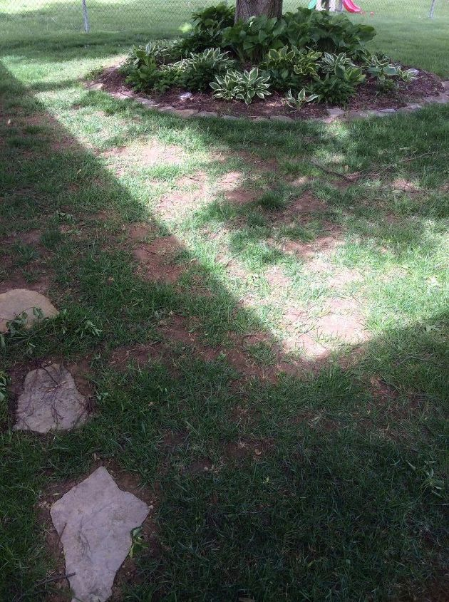 q what type of moss is good to use to fill bare patches
