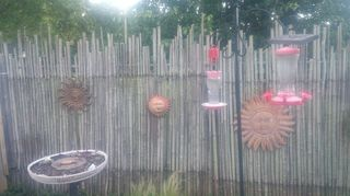 , Bamboo