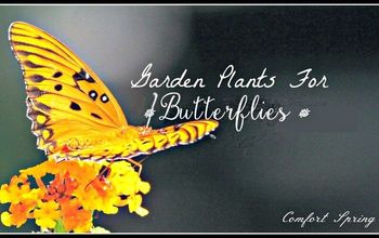 5 Steps For A  Butterfly Garden