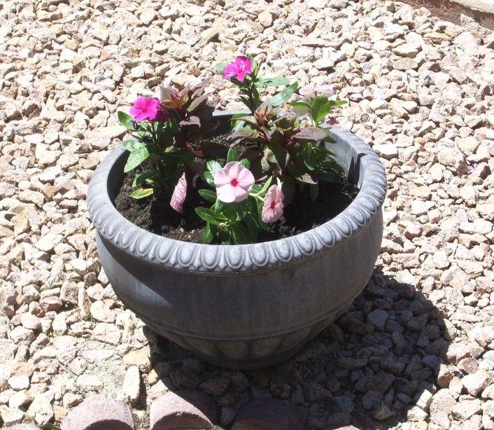 q flowers for desert landscape