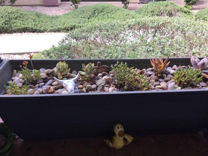 q planting succulent cactus flower boxes in north las vegas