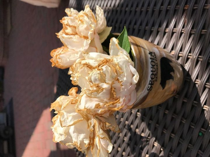 q what can be wrong with peonies flower edges turning brown