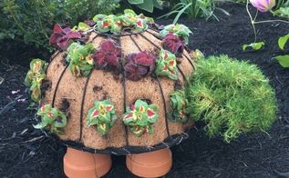 timmy the topiary turtle