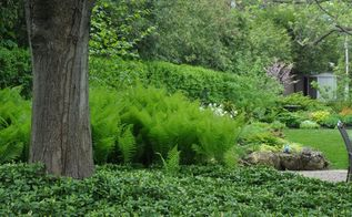 popular methods for controlling invasive plants do they really work, Pachysandra covering under a tree