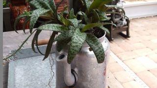 , a metal coffee pot