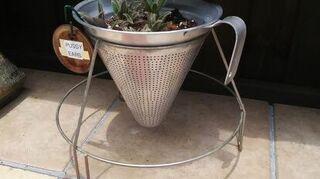 , a berry sieve