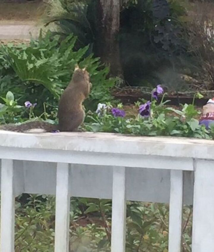 q how do you keep squirrels out of a garden and flowerbeds