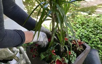 Simple Tips for Planting in a Larger Size Pot