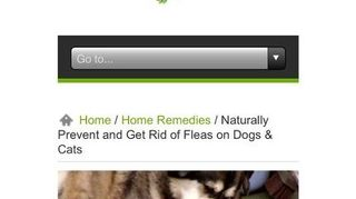 , Here is a site using essential oils It has a homemade flea repellant that works on my 3 chi chis