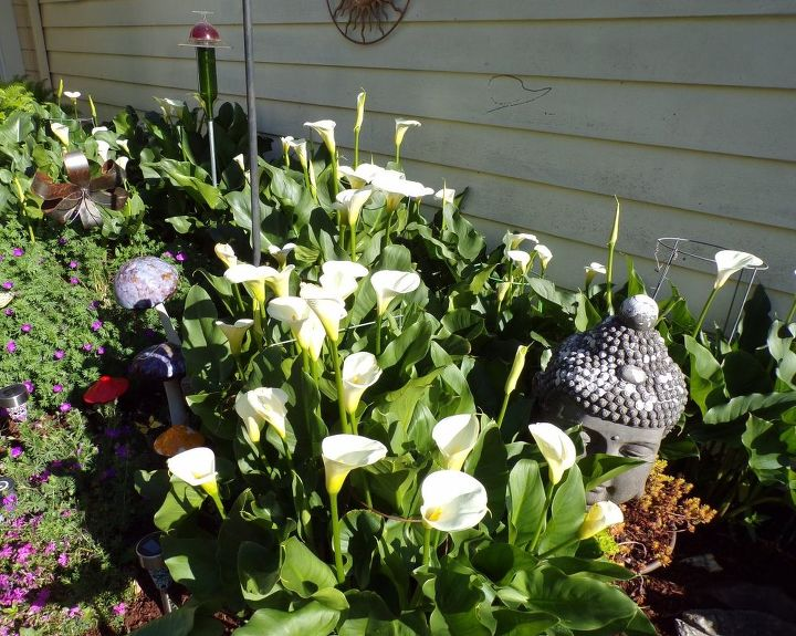 e peonies are starting