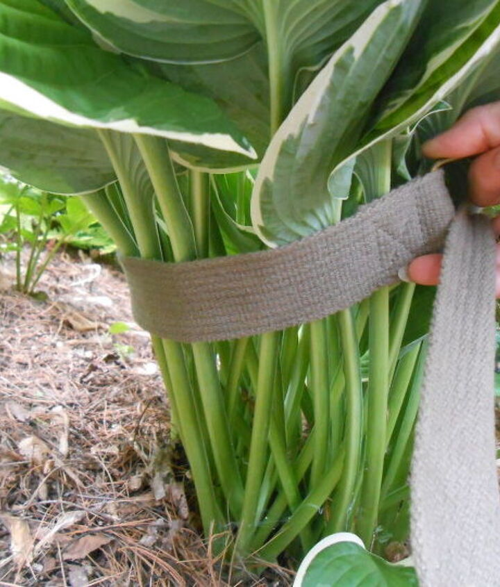 s see how 30 clever gardeners make their hostas thrive, They Move Greenery When It Gets Too Big