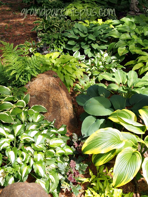 s see how 30 clever gardeners make their hostas thrive, They Know Which Hosta Must Be Moved
