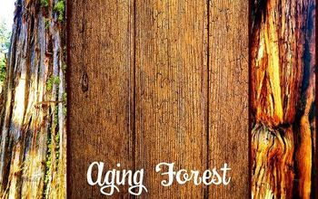 Lured to an Aging Forest- Incorporate Nature in Your Decor