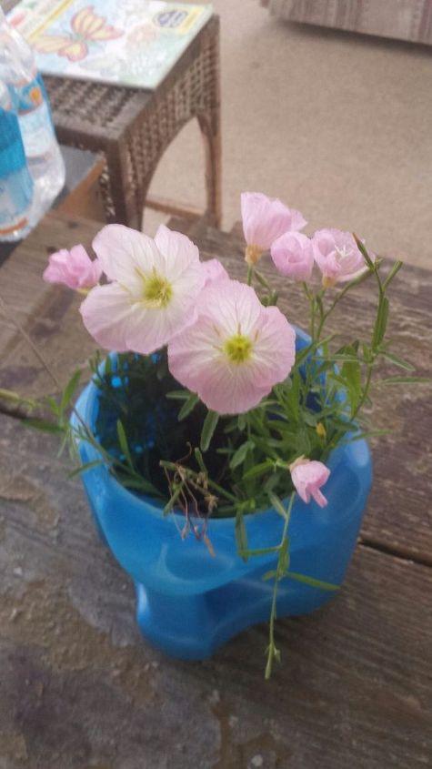 q pretty pink flowers