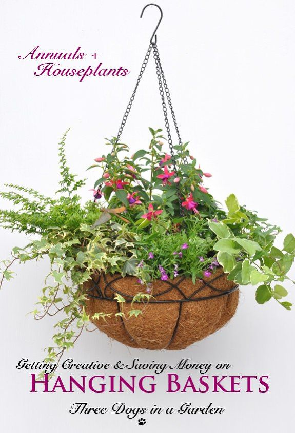 getting creative saving money on hanging baskets