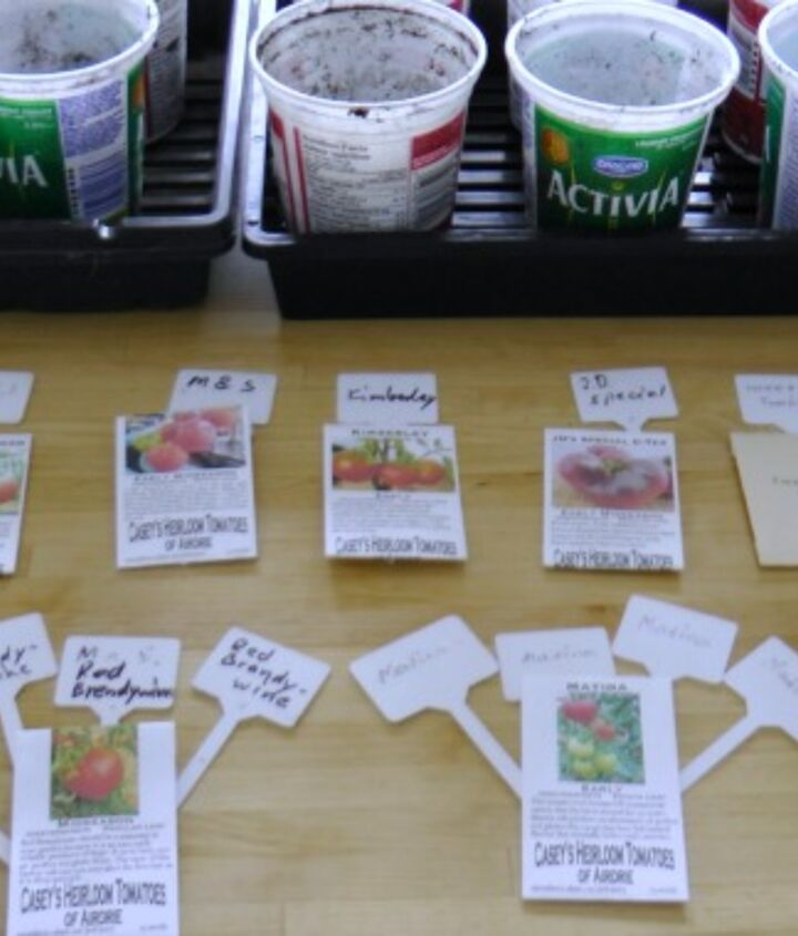 s the easiest ways to grow a bumper crop of tomatoes, Start the plants from seeds