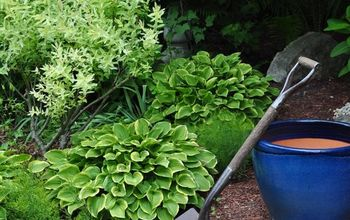 See How 30 Clever Gardeners Make Their Hostas Thrive