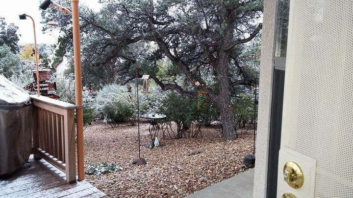 q backyard birds water fountain