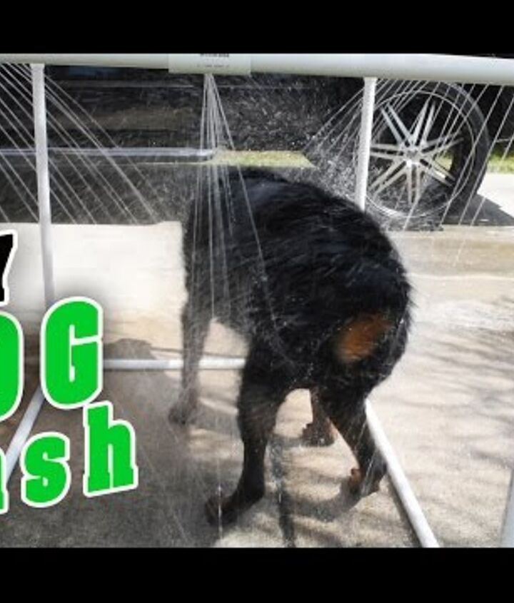 s 10 pawesome projects for your doggy, Get A Squeaky Clean Pooch With A Shower