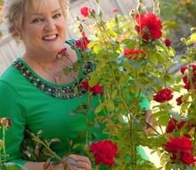 installing a new rose garden, Black Cherry In Texas Garden