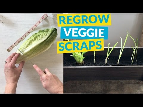 s 10 unique ways to plant your herb garden, Regrow Lettuce and Onions With A Chop