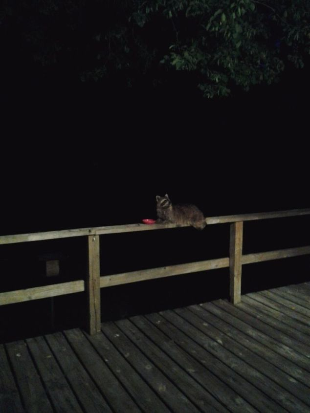 q how do i keep racoons from eating all the jam i put out for the birds