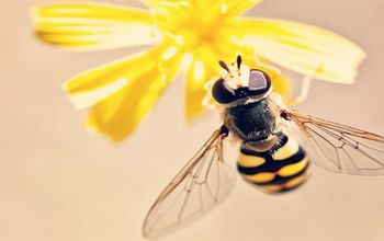 How to Attract Bees: An Easy Guide to a Bountiful Garden