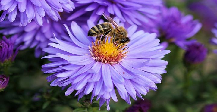 how to attract bees an easy guide to a bountiful garden