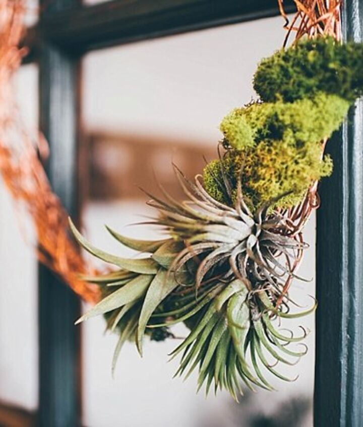 s 30 fabulous wreath ideas that will make your neighbors smile, Combine moss and air plants for greenery