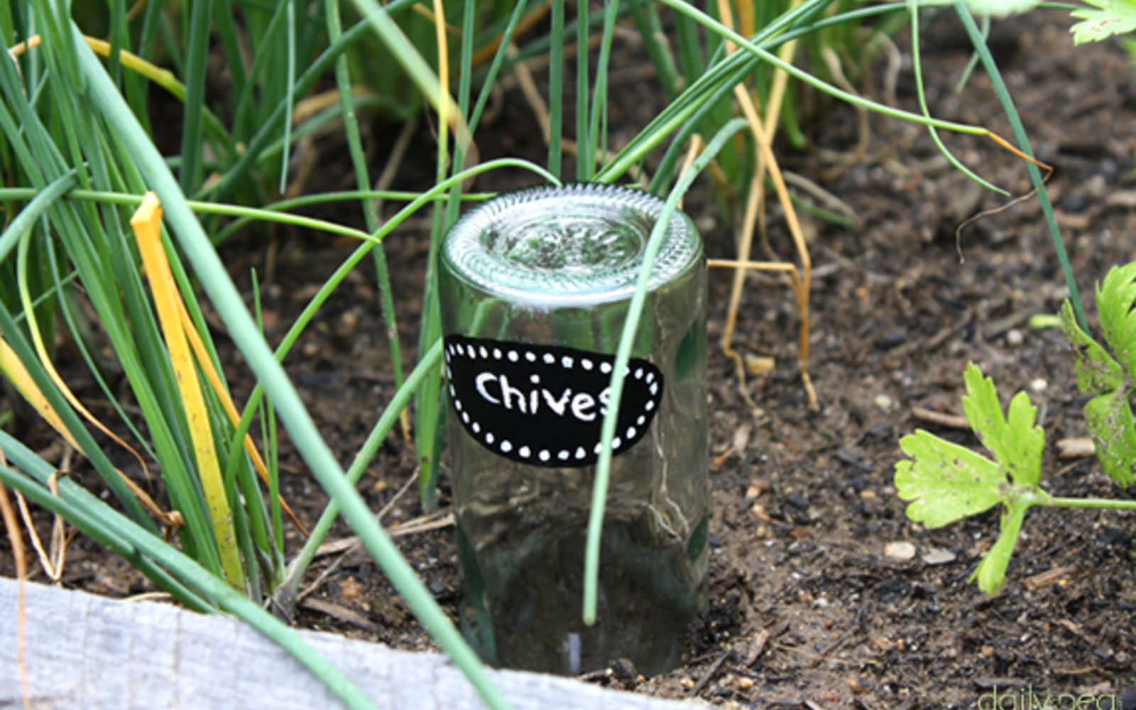 s 15 lovely repurposed items perfect for your garden, Transition Bottles Into Garden Markers