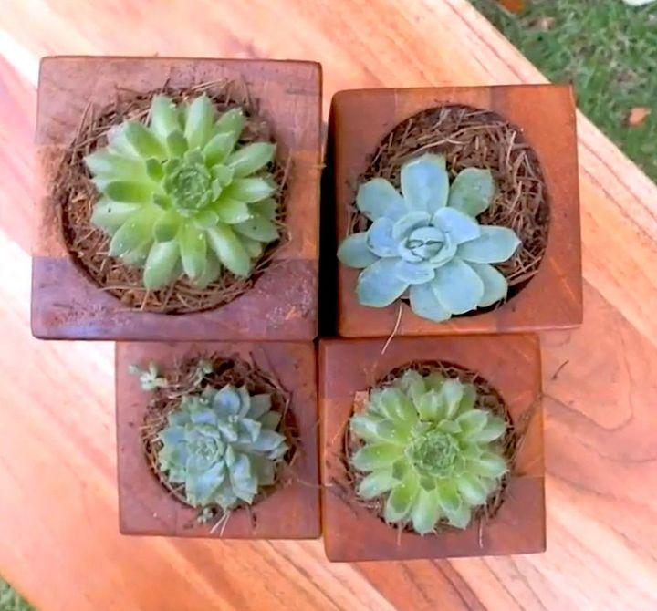Simple Succulent Planter