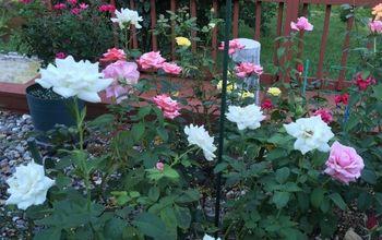 Create A Rose Garden Color Pallette
