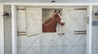 , Old garage doors that needed a pick me up I call him Old Paint because that what I painted him with