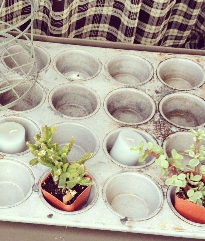 s 30 clever ideas to reuse muffin pans and cupcake liners, Have A Home For Your Succulents
