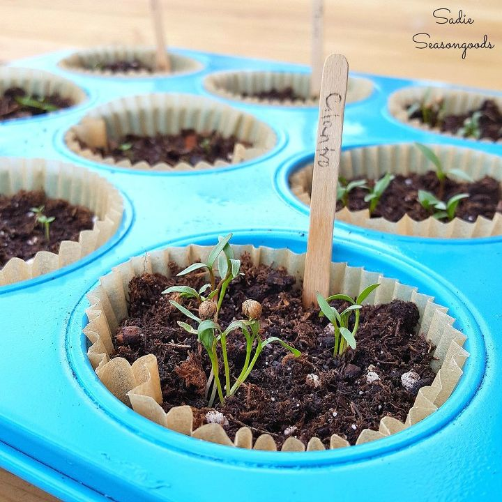 s 30 clever ideas to reuse muffin pans and cupcake liners, Use Them As Herb Starter Pots