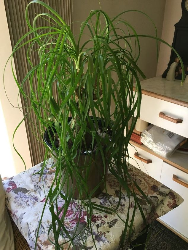 q what is this plant it was a gift and the giver doesn t know either