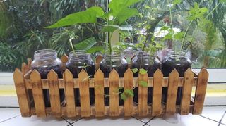 , I tried it This is my small kitchen garden