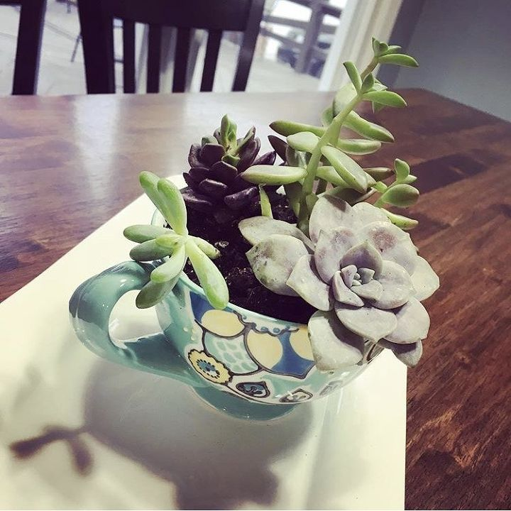 q what s the best soil for indoor succulents