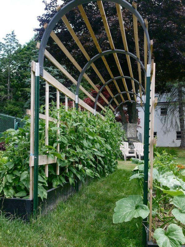 diy tomato trellis ideas to make your plants taller